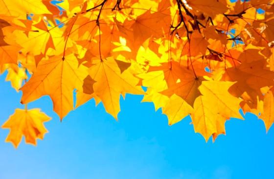 fall-stock-photo-640x420